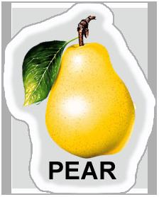pear_1