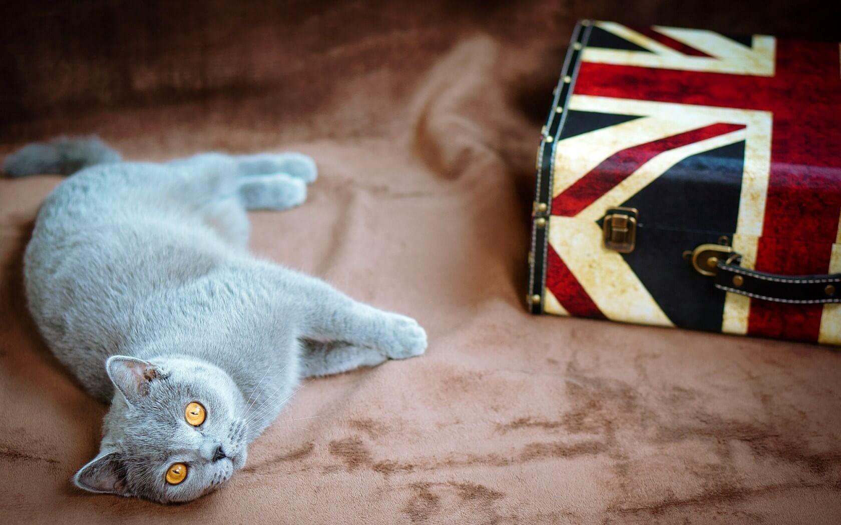 Знаменитые английские «кошачьи» идиомы и выражения